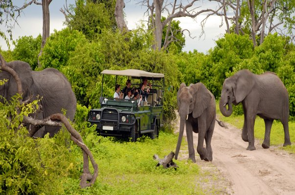 Elephants and a rover